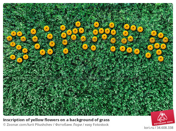Inscription of yellow flowers on a background of grass. Стоковое фото, фотограф Zoonar.com/Iurii Pliushchev / easy Fotostock / Фотобанк Лори