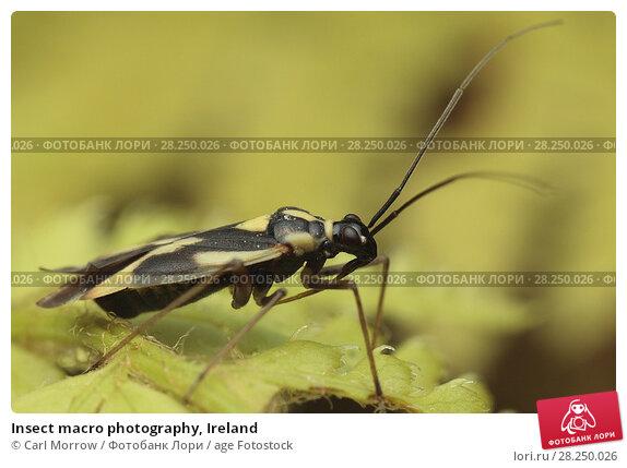 Купить «Insect macro photography, Ireland», фото № 28250026, снято 27 июля 2017 г. (c) age Fotostock / Фотобанк Лори