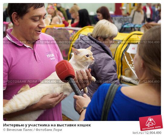 Купить «Интервью у участника на выставке кошек», эксклюзивное фото № 12904490, снято 17 октября 2015 г. (c) Вячеслав Палес / Фотобанк Лори