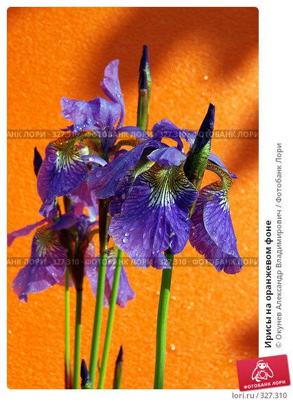 Купить «Ирисы на оранжевом фоне», фото № 327310, снято 15 июня 2008 г. (c) Окунев Александр Владимирович / Фотобанк Лори