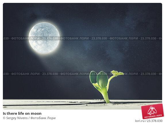 life on moon