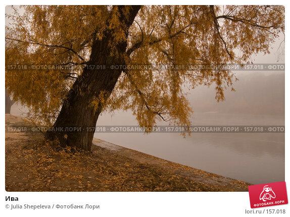 Ива, фото № 157018, снято 30 октября 2007 г. (c) Julia Shepeleva / Фотобанк Лори
