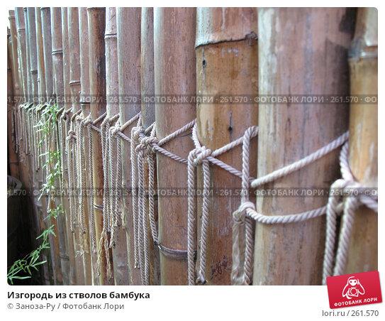 Купить «Изгородь из стволов бамбука», фото № 261570, снято 12 апреля 2008 г. (c) Заноза-Ру / Фотобанк Лори