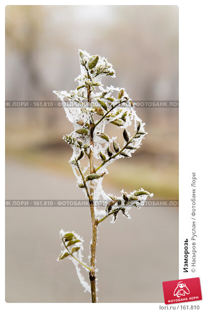 Изморозь, фото № 161810, снято 1 ноября 2007 г. (c) Насыров Руслан / Фотобанк Лори