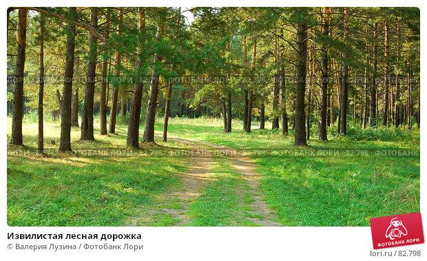 Извилистая лесная дорожка, фото № 82798, снято 29 августа 2007 г. (c) Валерия Потапова / Фотобанк Лори