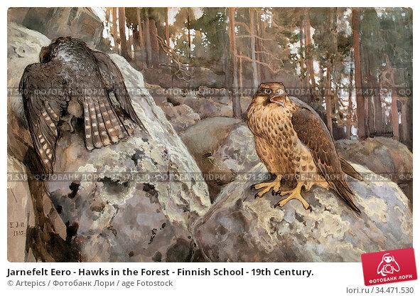 Jarnefelt Eero - Hawks in the Forest - Finnish School - 19th Century. Редакционное фото, фотограф Artepics / age Fotostock / Фотобанк Лори
