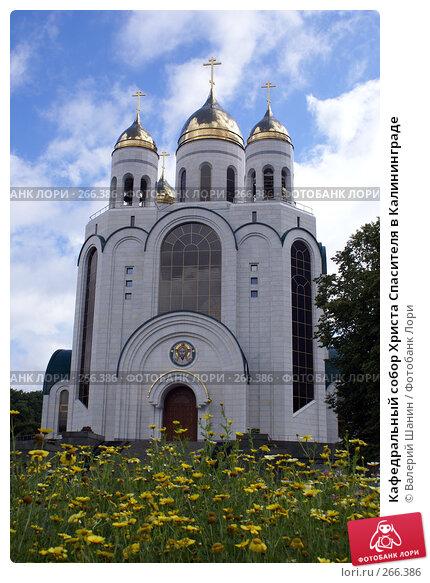 Кафедральный собор Христа Спасителя в Калининграде, фото № 266386, снято 31 июля 2007 г. (c) Валерий Шанин / Фотобанк Лори