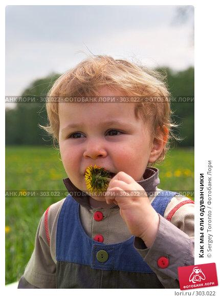 Как мы ели одуванчики, фото № 303022, снято 11 мая 2008 г. (c) Sergey Toronto / Фотобанк Лори