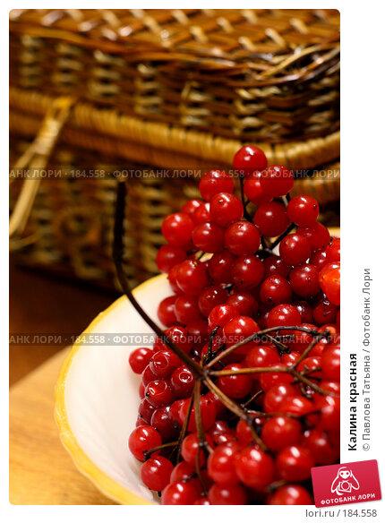 Калина красная, фото № 184558, снято 22 декабря 2007 г. (c) Павлова Татьяна / Фотобанк Лори