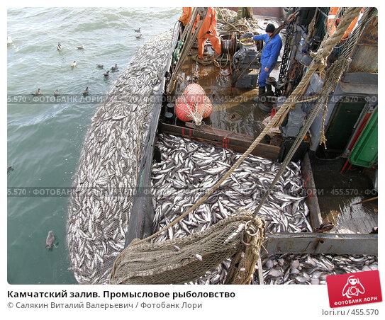 Купить «Камчатский залив. Промысловое рыболовство», фото № 455570, снято 14 июня 2008 г. (c) Салякин Виталий Валерьевич / Фотобанк Лори
