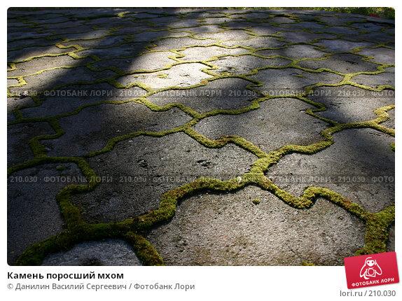 Камень поросший мхом, фото № 210030, снято 10 октября 2004 г. (c) Данилин Василий Сергеевич / Фотобанк Лори