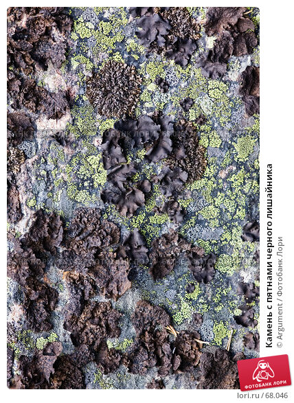 Купить «Камень с пятнами черного лишайника», фото № 68046, снято 23 июня 2007 г. (c) Argument / Фотобанк Лори