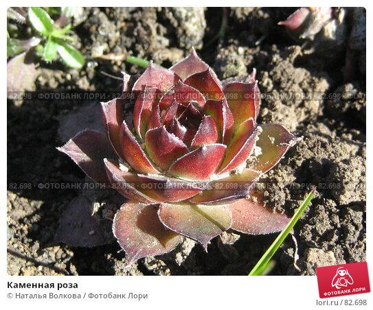 Каменная роза, фото № 82698, снято 31 марта 2007 г. (c) Наталья Волкова / Фотобанк Лори