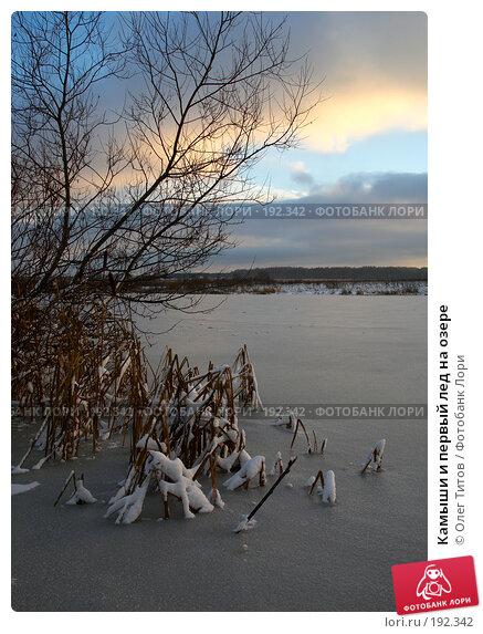 Камыши и первый лед на озере, фото № 192342, снято 11 ноября 2006 г. (c) Олег Титов / Фотобанк Лори