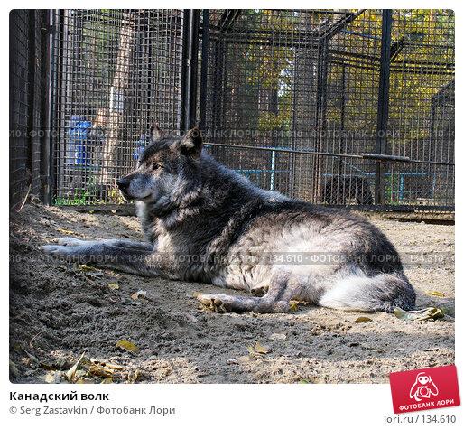 Канадский волк, фото № 134610, снято 10 октября 2004 г. (c) Serg Zastavkin / Фотобанк Лори
