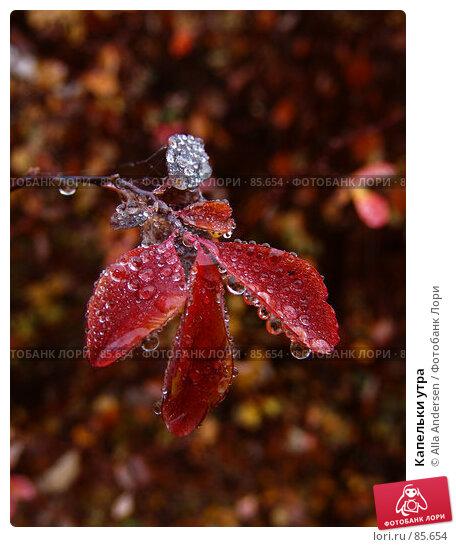 Капельки утра, фото № 85654, снято 25 ноября 2006 г. (c) Alla Andersen / Фотобанк Лори