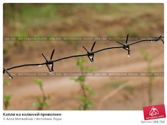 Купить «Капли на колючей проволоке», фото № 294154, снято 18 мая 2008 г. (c) Алла Матвейчик / Фотобанк Лори
