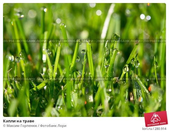 Капли на траве, фото № 280914, снято 15 сентября 2007 г. (c) Максим Горпенюк / Фотобанк Лори