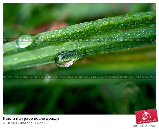 Капли на траве после дождя, фото № 218582, снято 29 марта 2017 г. (c) ElenArt / Фотобанк Лори