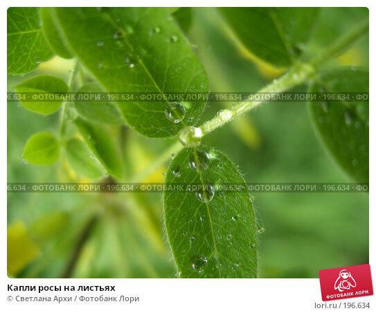 Капли росы на листьях, фото № 196634, снято 25 мая 2006 г. (c) Светлана Архи / Фотобанк Лори