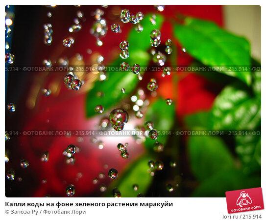 Капли воды на фоне зеленого растения маракуйи, фото № 215914, снято 2 марта 2008 г. (c) Заноза-Ру / Фотобанк Лори