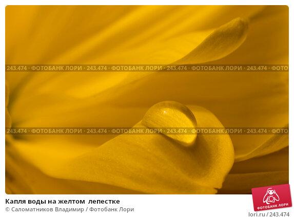 Капля воды на желтом  лепестке, фото № 243474, снято 16 ноября 2007 г. (c) Саломатников Владимир / Фотобанк Лори