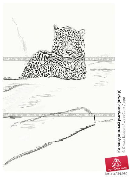 Карандашный рисунок (ягуар), фото № 34950, снято 11 декабря 2016 г. (c) Ольга Шаран / Фотобанк Лори