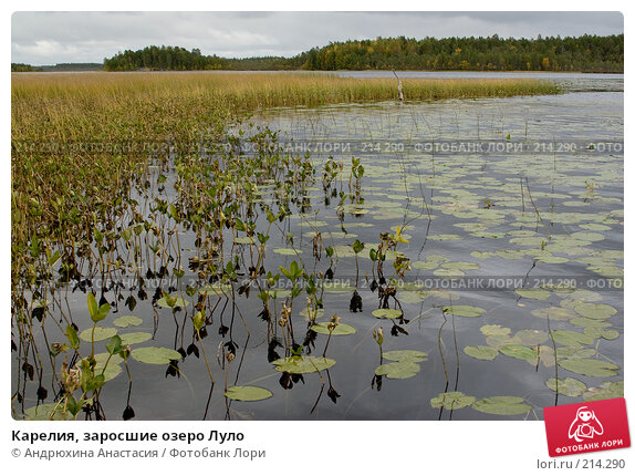 Карелия, заросшие озеро Луло, фото № 214290, снято 15 сентября 2007 г. (c) Андрюхина Анастасия / Фотобанк Лори