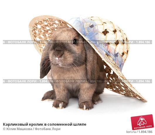 Купить «Карликовый кролик в соломенной шляпе», фото № 1894186, снято 4 августа 2010 г. (c) Юлия Машкова / Фотобанк Лори
