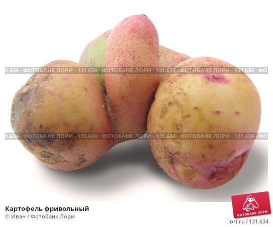 Купить «Картофель фривольный», фото № 131634, снято 8 июля 2007 г. (c) Иван / Фотобанк Лори