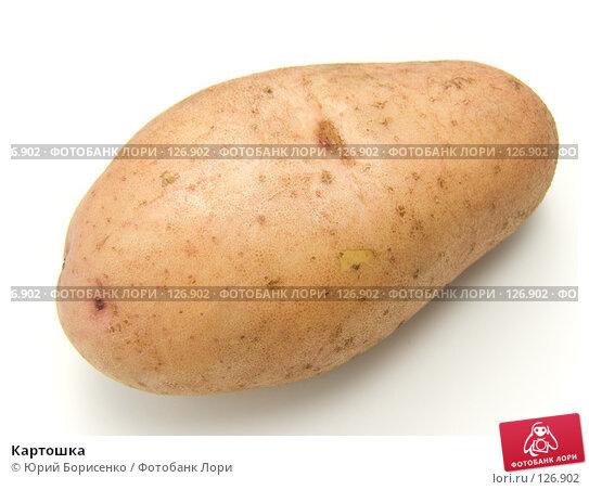 Картошка, фото № 126902, снято 15 сентября 2007 г. (c) Юрий Борисенко / Фотобанк Лори