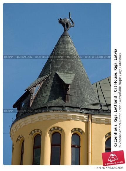 Katzenhaus, Riga, Lettland | Cat House, Riga, Latvia. Стоковое фото, фотограф Zoonar.com/Günter Lenz / age Fotostock / Фотобанк Лори