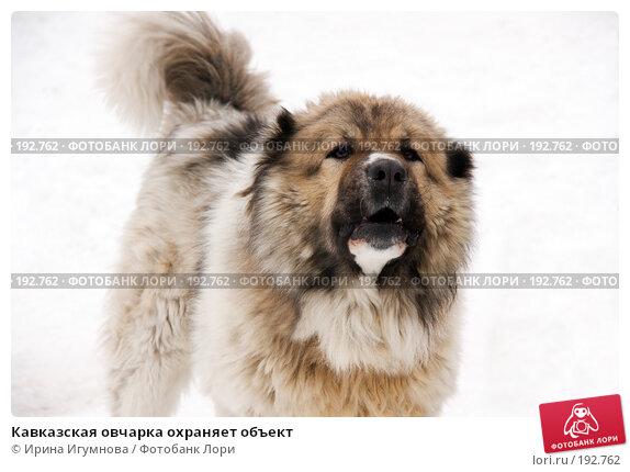 Кавказская овчарка охраняет объект, фото № 192762, снято 2 февраля 2008 г. (c) Ирина Игумнова / Фотобанк Лори