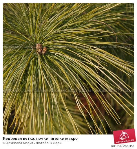 Кедровая ветка, почки, иголки макро, фото № 283454, снято 9 мая 2008 г. (c) Архипова Мария / Фотобанк Лори