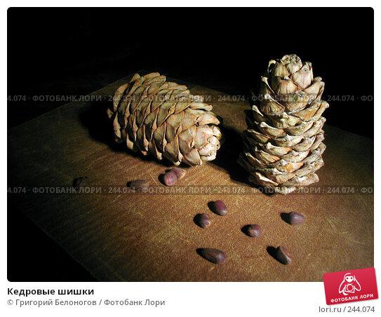 Купить «Кедровые шишки», фото № 244074, снято 1 ноября 2006 г. (c) Григорий Белоногов / Фотобанк Лори