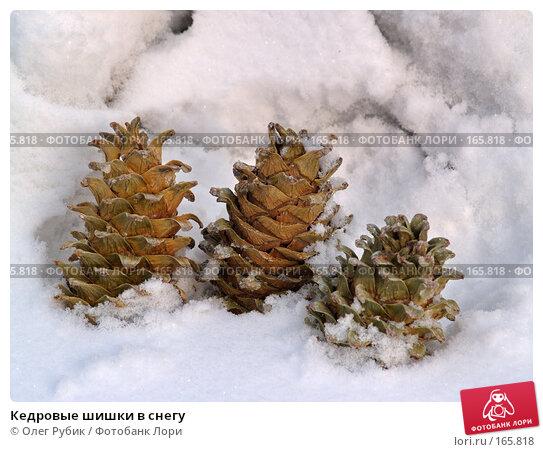 Кедровые шишки в снегу, фото № 165818, снято 30 декабря 2007 г. (c) Олег Рубик / Фотобанк Лори