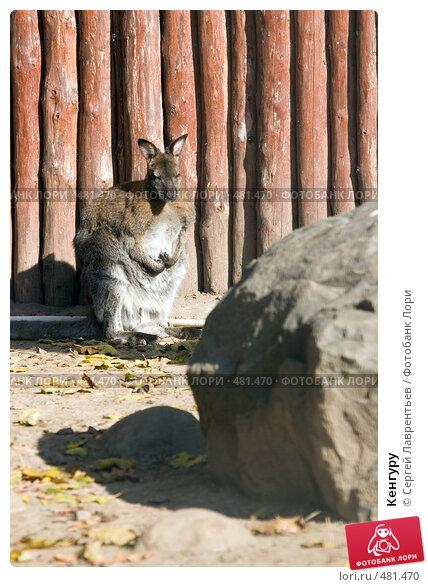 Кенгуру, фото № 481470, снято 26 сентября 2008 г. (c) Сергей Лаврентьев / Фотобанк Лори