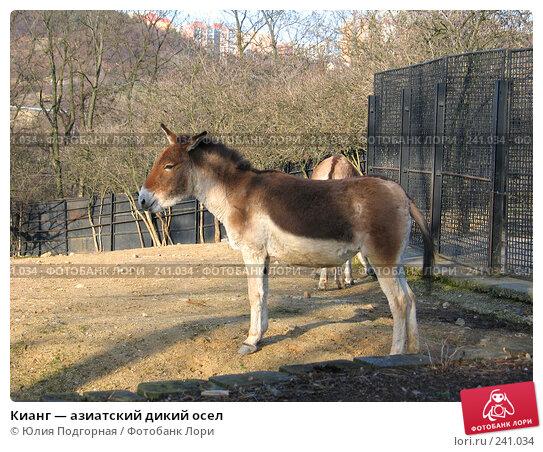 Кианг — азиатский дикий осел, фото № 241034, снято 15 марта 2008 г. (c) Юлия Селезнева / Фотобанк Лори