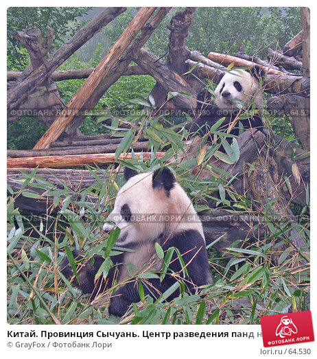 Китай. Провинция Сычуань. Центр разведения панд на окраине Чэнду., фото № 64530, снято 15 октября 2004 г. (c) GrayFox / Фотобанк Лори