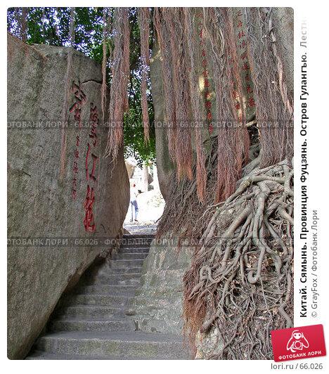 Китай. Сямынь. Провинция Фуцзянь. Остров Гулангъю.  Лестница между деревом и скалой., фото № 66026, снято 20 октября 2004 г. (c) GrayFox / Фотобанк Лори