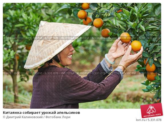 нашем интернет когда собирают урожай апельсинов в греции отчетные налоговый