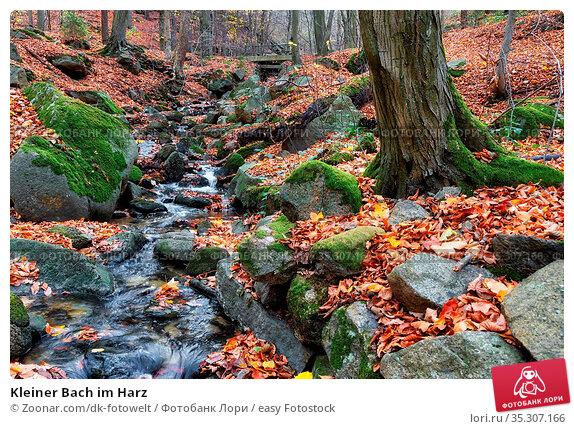 Kleiner Bach im Harz. Стоковое фото, фотограф Zoonar.com/dk-fotowelt / easy Fotostock / Фотобанк Лори
