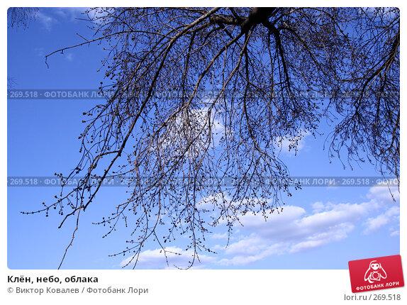 Клён, небо, облака, фото № 269518, снято 26 апреля 2008 г. (c) Виктор Ковалев / Фотобанк Лори