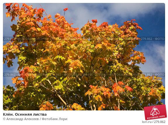 Клён. Осенняя листва, эксклюзивное фото № 279862, снято 14 сентября 2005 г. (c) Александр Алексеев / Фотобанк Лори