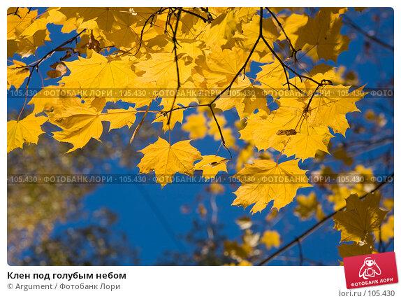 Клен под голубым небом, фото № 105430, снято 21 октября 2007 г. (c) Argument / Фотобанк Лори