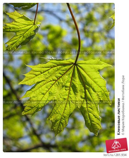 Купить «Кленовые листики», фото № 281934, снято 29 апреля 2008 г. (c) Мария Коробкина / Фотобанк Лори