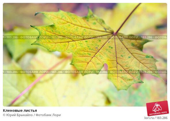 Кленовые листья, фото № 183286, снято 22 октября 2007 г. (c) Юрий Брыкайло / Фотобанк Лори