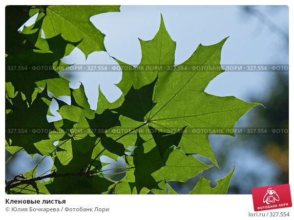 Кленовые листья, фото № 327554, снято 1 сентября 2007 г. (c) Юлия Бочкарева / Фотобанк Лори