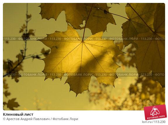 Кленовый лист, фото № 113230, снято 20 октября 2007 г. (c) Арестов Андрей Павлович / Фотобанк Лори
