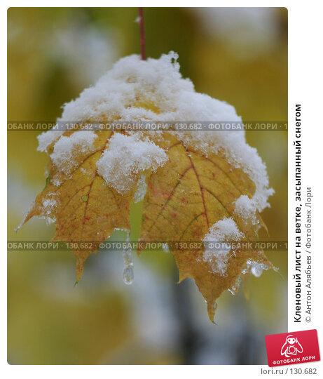 Купить «Кленовый лист на ветке, засыпанный снегом», фото № 130682, снято 15 октября 2007 г. (c) Антон Алябьев / Фотобанк Лори